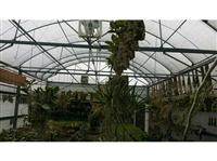 溫室屋頂工程-2