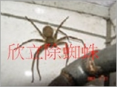 蜘蛛、消毒除蟲