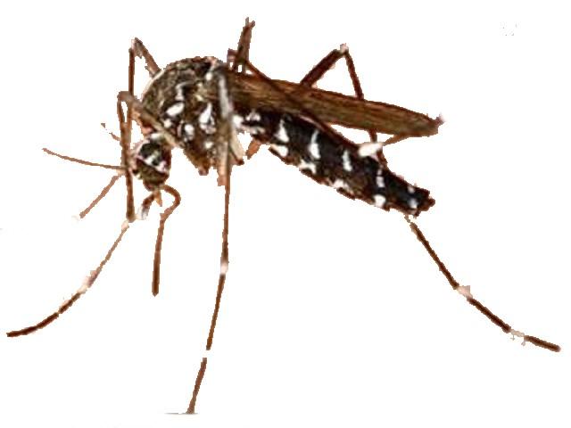 蚊子/蒼蠅