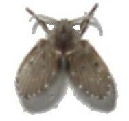 蛾蚋、蝶蠅防治