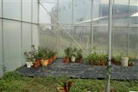 無焊接連棟園藝溫室
