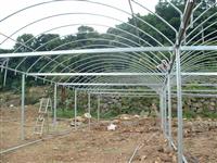 連棟式溫室鋼管架設工程