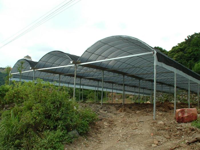 連棟式網架溫室工程