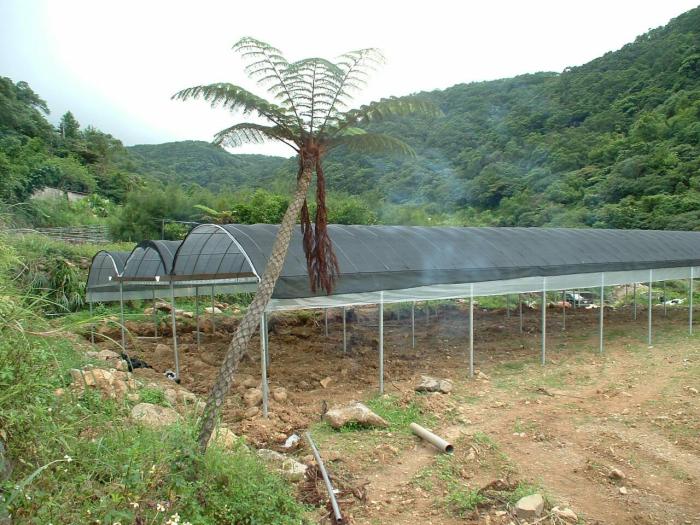 連棟式疏果育苗溫室