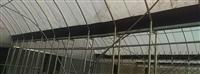 四連棟式園藝花卉溫室