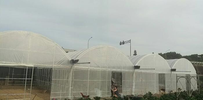 四連棟式蔬菜溫室工程