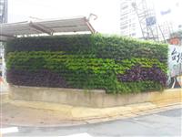 工地圍籬綠化