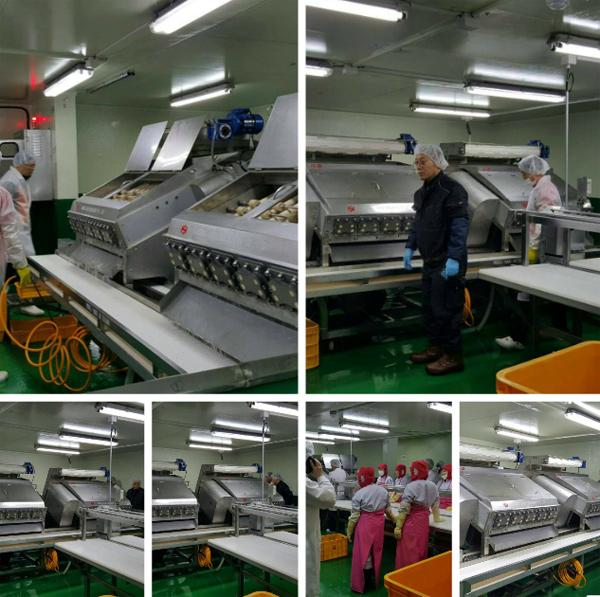 韓國蝦剝殼自動處理機