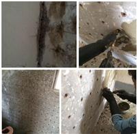 壁癌處理、牆壁壁癌處理