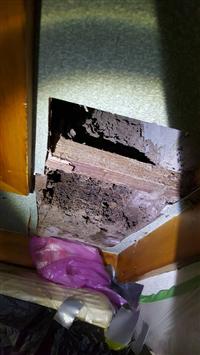櫥櫃白蟻防治
