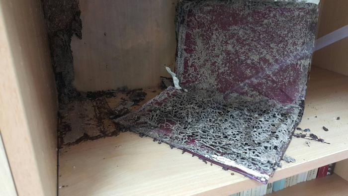 地墊白蟻防治