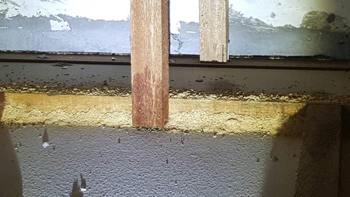 住宅白蟻處理