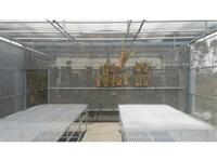 溫室植床-1