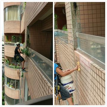 外牆樹木清除