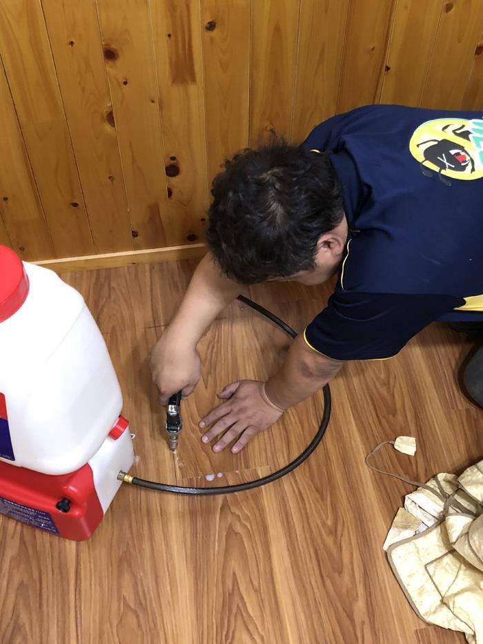 木地板白蟻防治