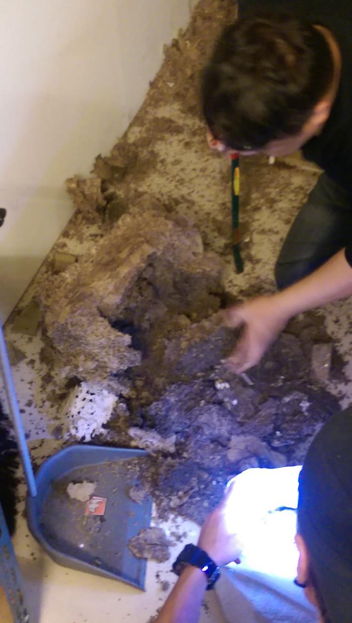 摘除蟻巢防治