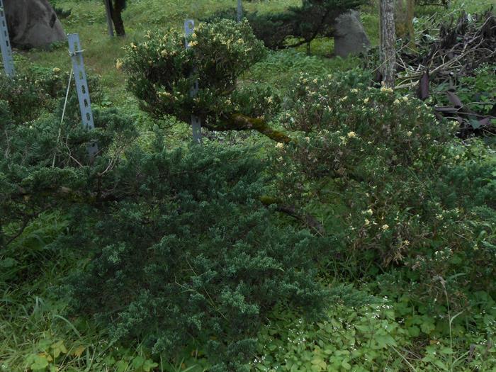 玉山鐵柏-彰大農園0920-008-538