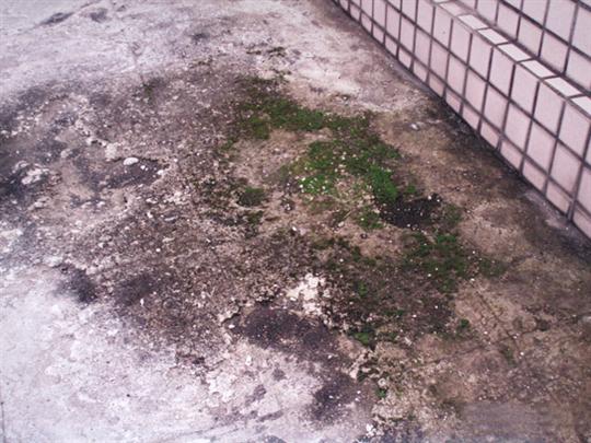 興永防水防漏工程行 - 漏水工程