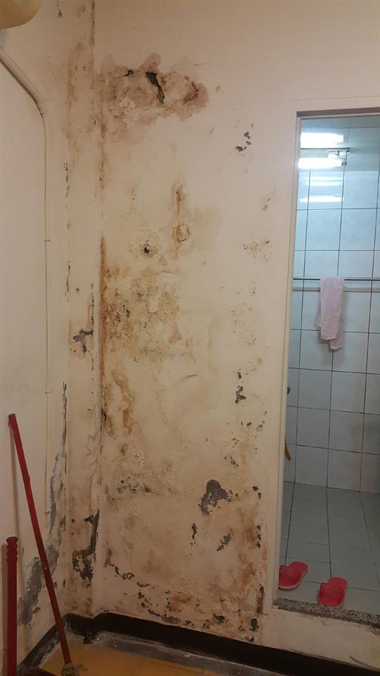 漏水壁癌牆面處理