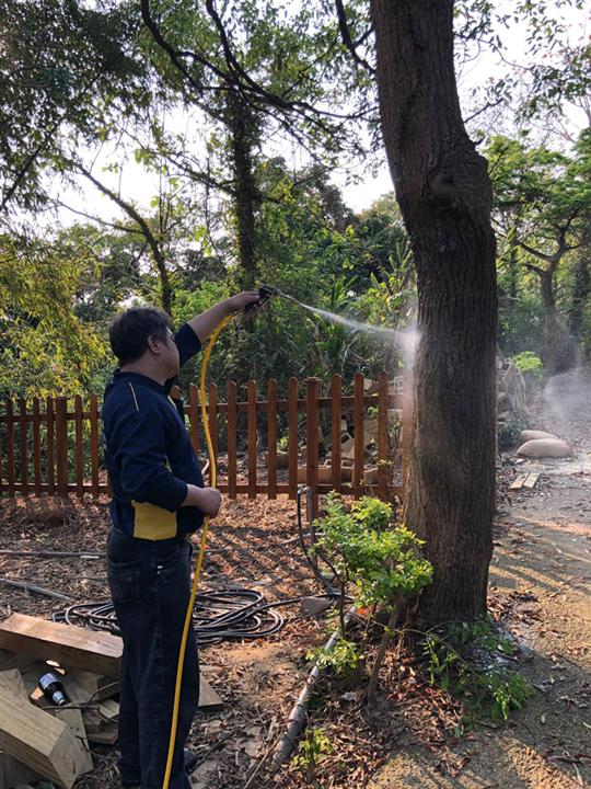 樹木白蟻防治