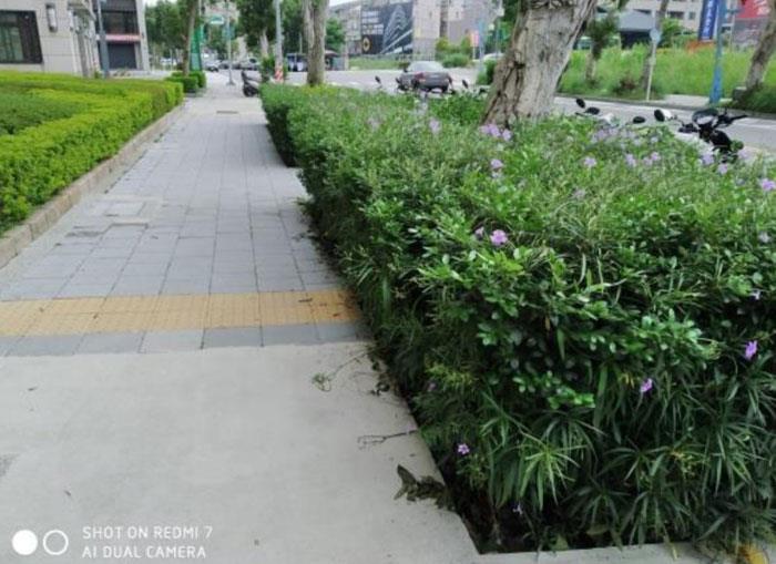 社區灌木圖騰維護前
