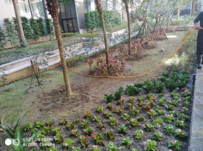灌木植栽補植後
