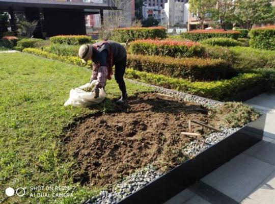 雜草挖除施工