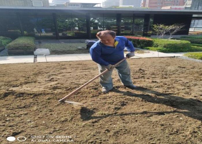 土球鬆土施工中