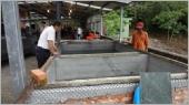 大閘蟹養殖場
