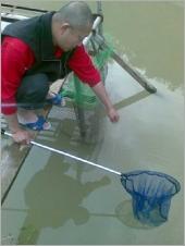 親自釣大閘蟹樂趣