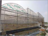 三連棟鋸齒型H型鋼骨結構溫室工程