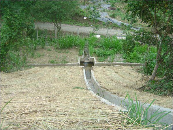 稻草蓆鋪設完成作品