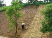 山坡地鋪設稻草