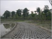 植草磚鋪設實績/左鎮社區造景