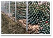 花圃菱形網